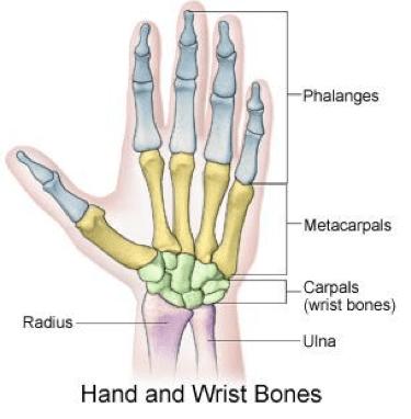 Hand_and_wrist_bones
