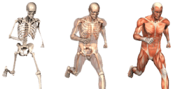 Orthopaedic Physiotherapy and its benefits