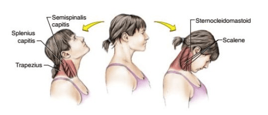 Neck exercises up and down